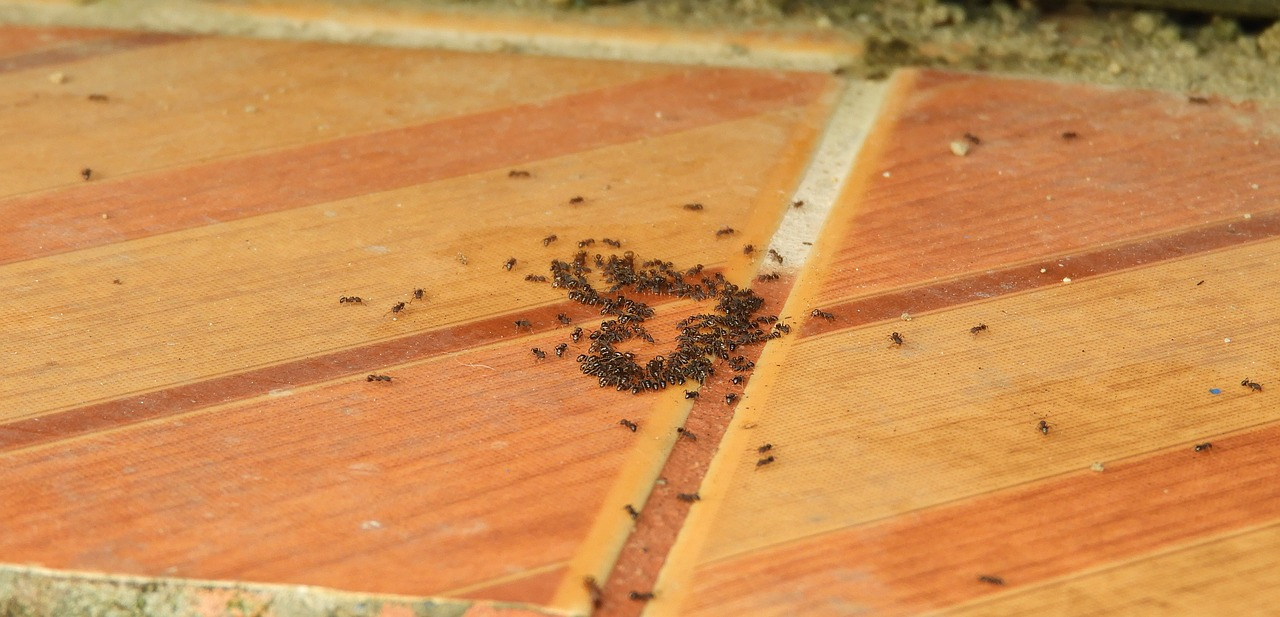 The Service Procedure Carried Out By The Ant Treatment Experts